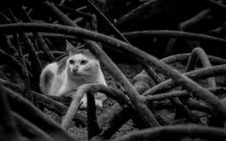 Katze in der Mangrove Stockfotos