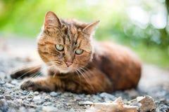 Katze in der Natur Stockfotografie