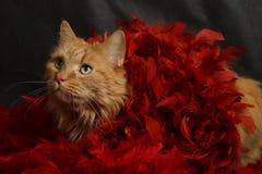 Katze in der roten Boa Stockfotos