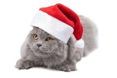 Katze in der roten Schutzkappe getrennt Lizenzfreie Stockfotos