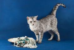 Katze der Savannenzucht Stockbilder