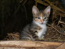 Katze in der Scheune Lizenzfreie Stockbilder