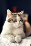Katze in der Schule Stockfotografie