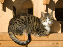 Katze in der Sonne Lizenzfreies Stockbild