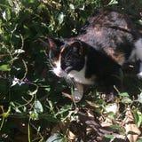 Katze in der sonnigen Stelle wieder Stockfoto