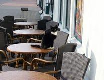 Katze in der Stadt Stockfoto