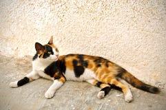 Katze der Straße stockfotografie