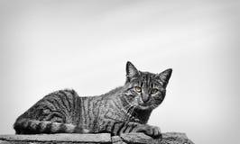 Katze in der Straße Stockfoto