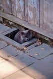 Katze in der Straße Lizenzfreies Stockfoto