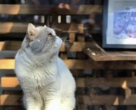 Katze in der Straße Wudaoying Lizenzfreie Stockfotos