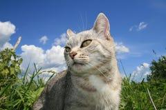 Katze in der Suche des Bergbaus lizenzfreies stockfoto