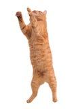 Katze in der Tätigkeit Stockfotografie