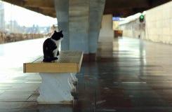 Katze in der U-Bahn Lizenzfreie Stockfotografie