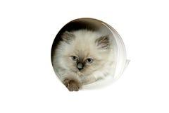 Katze in der Wand Lizenzfreie Stockbilder