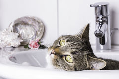 Katze in der Wanne lizenzfreies stockbild
