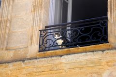 Katze in der Wohnung lizenzfreie stockfotografie