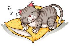 Katze, die über dem Kissen schläft Stockbild