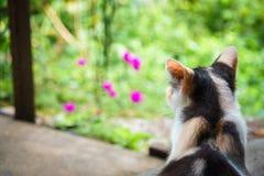 Katze, die über Garten sitzt und schaut Lizenzfreies Stockbild