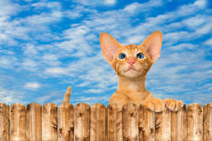 Katze, die über Gartenzaun schaut Stockfotografie