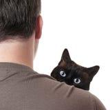 Katze, die über Schulter späht Stockbilder