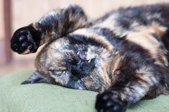 Katze, die absolut vortäuscht Stockbilder