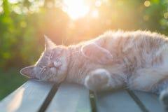 Katze, die auf Bank in der Hintergrundbeleuchtung bei Sonnenuntergang liegt Lizenzfreies Stockfoto