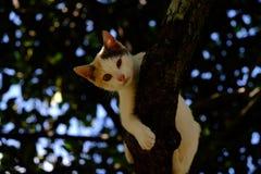 Katze, die auf Baum schläft Stockfoto