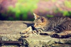 Katze, die auf Betondecke liegt Stockfotografie