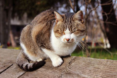 Katze, die auf Bretterzaun sitzt Lizenzfreie Stockfotografie