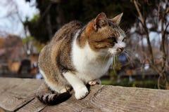 Katze, die auf Bretterzaun sitzt Stockbild