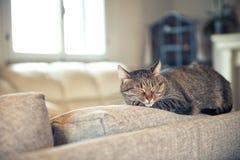 Katze, die auf Couch sich entspannt Lizenzfreies Stockbild