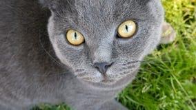 Katze, die auf das Gras legt und die Kamera betrachtet stock footage