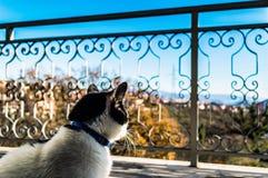 Katze, die auf dem Balkon in Rijeka stillsteht lizenzfreie stockbilder