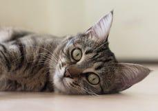 Katze, die auf dem Boden spielt und liegt lizenzfreie stockfotografie