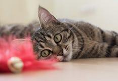 Katze, die auf dem Boden spielt und liegt lizenzfreie stockbilder