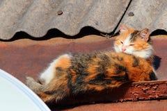 Katze, die auf dem Dach, in der Sonne aalende und ein Sonnenbad nehmende Katze schläft Lizenzfreies Stockfoto