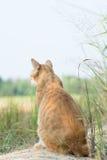 Katze, die auf dem Feld sitzt Lizenzfreie Stockbilder