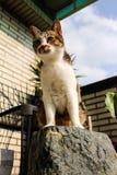 Katze, die auf dem Felsen steht Lizenzfreie Stockfotos