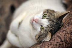 Katze, die auf dem Fußboden liegt stockfoto