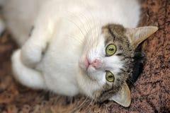 Katze, die auf dem Fußboden liegt stockbild