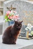 Katze, die auf dem Grab am Kirchhof in Paris sitzt Lizenzfreies Stockfoto