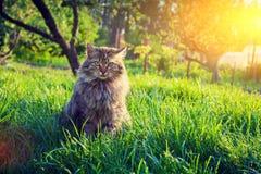 Katze, die auf dem Gras sich entspannt Lizenzfreies Stockfoto