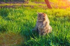 Katze, die auf dem Gras sich entspannt Lizenzfreie Stockfotografie
