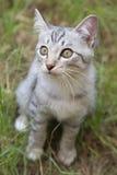 Katze, die auf dem Gras sitzt Lizenzfreie Stockbilder