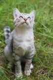 Katze, die auf dem Gras sitzt und den Himmel betrachtet Lizenzfreie Stockbilder