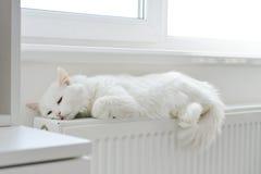 Katze, die auf dem Heizkörper sich entspannt Stockbilder