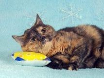 Katze, die auf dem Kissen liegt Lizenzfreie Stockbilder