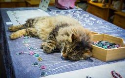 Katze, die auf dem Schmuck schläft Stockfotos