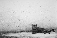 Katze, die auf dem schmutzigen Boden am Gebäude niederlegt Lizenzfreie Stockfotografie