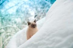 Katze, die auf dem Schnee sitzt Stockfotografie